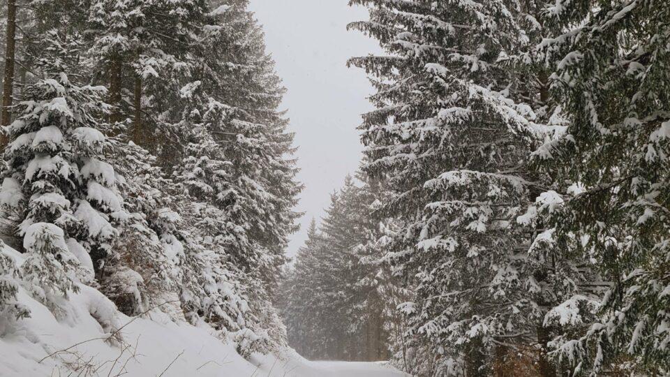 Tour #03|2021 – Extrem Schneeschuhwandern auf der Wildalpe